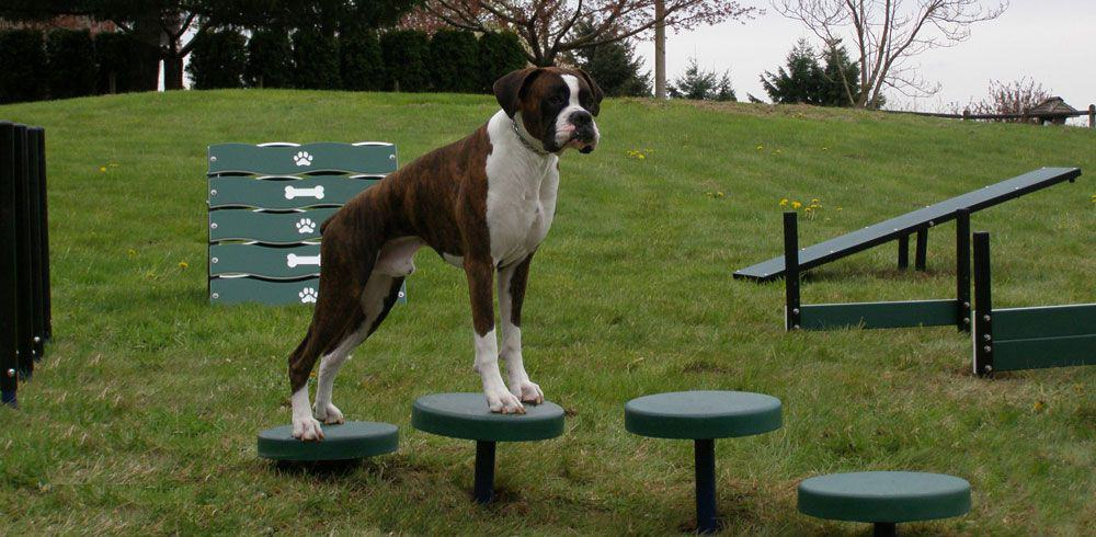 plastic dog playground equipment