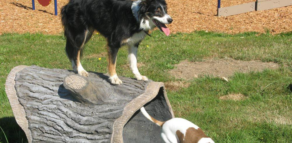 dog park play equipment